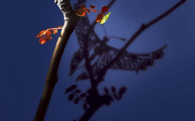 papillon ambiance
